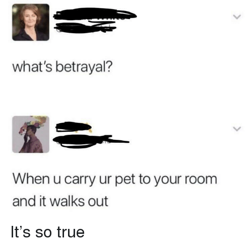 True, Pet, and Whats: what's betrayal?  When u carry ur pet to your room  and it walks out It's so true