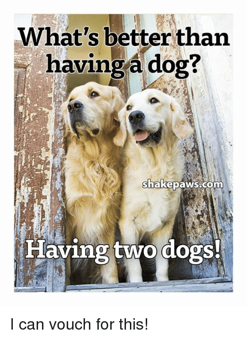 Dogs, Memes, and 🤖: What's better than  having a dog?  nakepaNS com  laving two dogs. I can vouch for this!