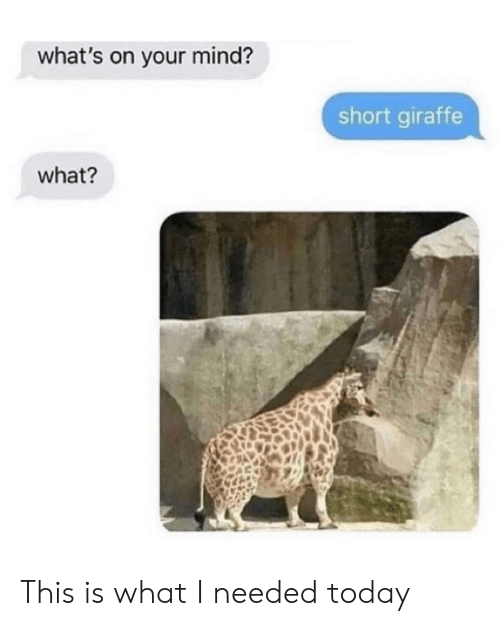 Giraffe: what's on your mind?  short giraffe  what? This is what I needed today