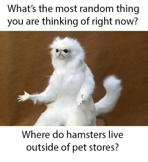 Live, Random, and Pet: What's the most random thing  you are thinking of right now?  Where do hamsters live  outside of pet stores?