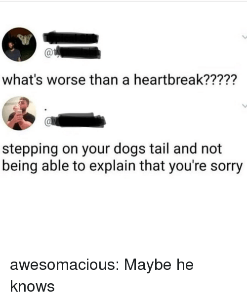 Dogs, Sorry, and Tumblr: what's worse than a heartbreak?????  stepping on your dogs tail and not  being able to explain that you're sorry awesomacious:  Maybe he knows