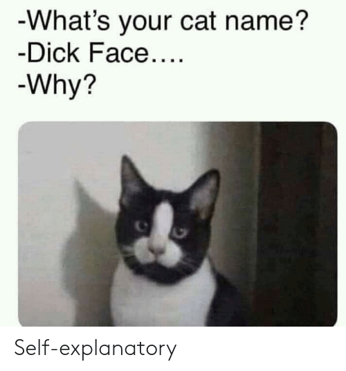 Dick, Cat, and Name: -What's your cat name?  -Dick Face...  -Why? Self-explanatory