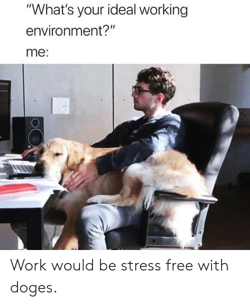 """Dank, Work, and Free: """"What's your ideal working  environment?""""  me: Work would be stress free with doges."""