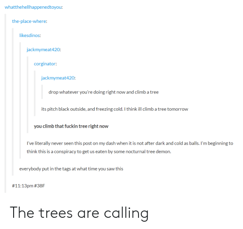 nocturnal: whatthehellhappenedtoyou:  the-place-where:  ikesdinos:  jackmymeat420:  corginator  jackmymeat420  drop whatever you're doing right now and climb a tree  its pitch black outside, and freezing cold. I think ill climb a tree tomorrow  you climb that fuckin tree right now  I've literally never seen this post on my dash when it is not after dark and cold as balls. I'm beginning to  think this is a conspiracy to get us eaten by some nocturnal tree demon.  everybody put in the tags at what time you saw this  # 11:13pm The trees are calling