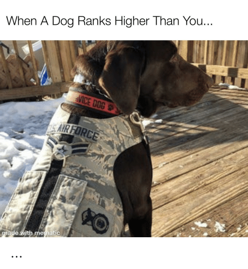 Higher: When A Dog Ranks Higher Than You...  MICE DOG  SAIR FORCE  made with mematic …