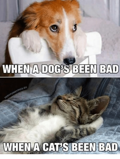 Bad, Cats, and Dogs: WHEN A DOG'S BEEN BAD  EU  WHEN  A CAT'S BEEN BAD