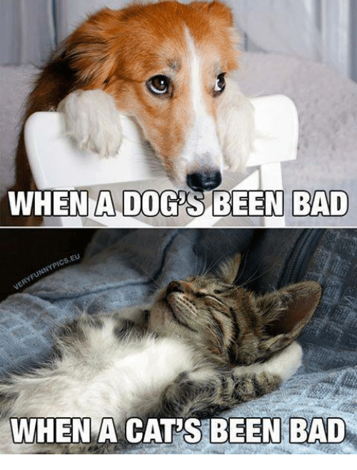 Bad, Cats, and Dogs: WHEN A DOGS BEEN BAD  WHENA CAT'S BEEN BAD