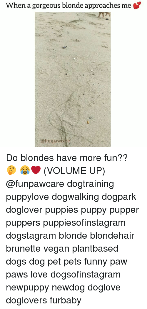 Dogs, Funny, and Love: When a gorgeous blonde approaches me  @funpawcare Do blondes have more fun?? 🤔 😂❤️ (VOLUME UP) @funpawcare dogtraining puppylove dogwalking dogpark doglover puppies puppy pupper puppers puppiesofinstagram dogstagram blonde blondehair brunette vegan plantbased dogs dog pet pets funny paw paws love dogsofinstagram newpuppy newdog doglove doglovers furbaby