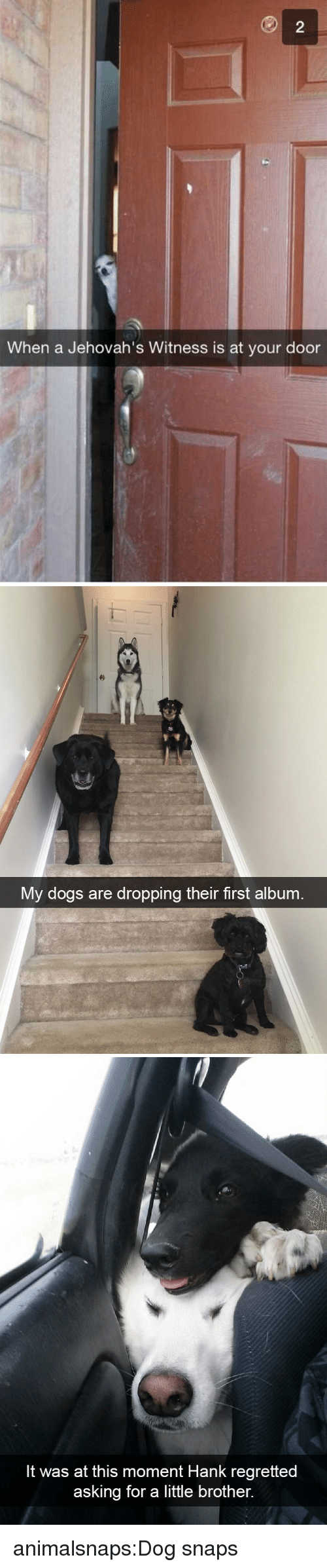 Hank: When a Jehovah's Witness is at your door   My dogs are dropping their first album   It was at this moment Hank regretted  asking for a little brother. animalsnaps:Dog snaps