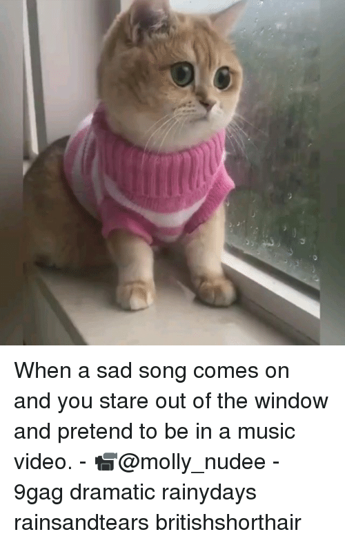 9gag, Memes, and Molly: When a sad song comes on and you stare out of the window and pretend to be in a music video. - 📹@molly_nudee - 9gag dramatic rainydays rainsandtears britishshorthair