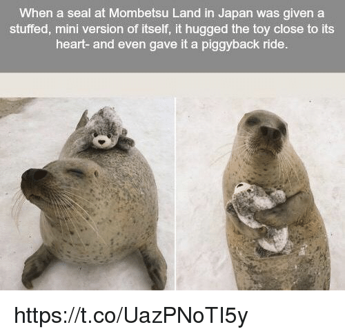 Memes, Heart, and Japan: When a seal at Mombetsu Land in Japan was given a  stuffed, mini version of itself, it hugged the toy close to its  heart- and even gave it a piggyback ride. https://t.co/UazPNoTI5y