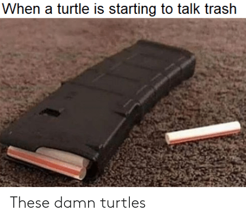 Funny, Trash, and Turtle: When a turtle is starting to talk trash These damn turtles
