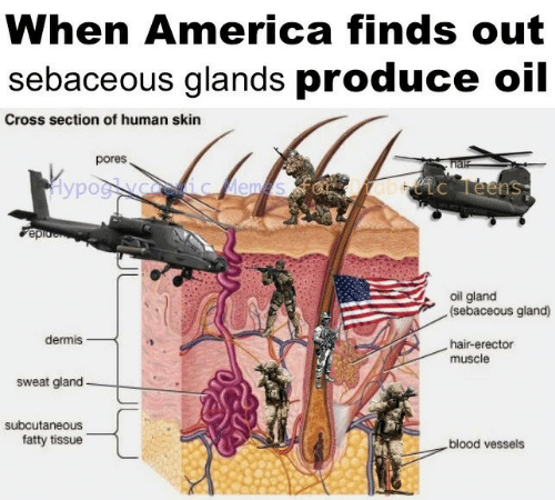 America, Cross, and Hair: When America finds out  sebaceous glands produce oil  Cross section of human skin  pores  hal  Hypog yoceic ems  abtc Teens  epio  oil gland  (sebaceous gland)  dermis  hair-erector  muscle  sweat gland  subcutaneous  fatty tissue  blood vessels