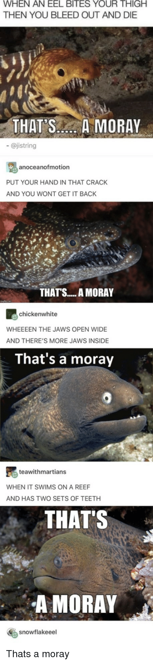 Back, Jaws, and Teeth: WHEN AN EEL BITES YOUR THIGH  THEN YOU BLEED OUT AND DIE  THAT'S AMORAY  - @jistring  anoceanofmotion  PUT YOUR HAND IN THAT CRACK  AND YOU WONT GET IT BACK  THATS... A MORAY  chickenwhite  WHEEEEN THE JAWS OPEN WIDE  AND THERE'S MORE JAWS INSIDE  That's a moray  teawithmartians  WHEN IT SWIMS ON A REEF  AND HAS TWO SETS OF TEETH  THATS  A MORAY  snowfla keee! Thats a moray