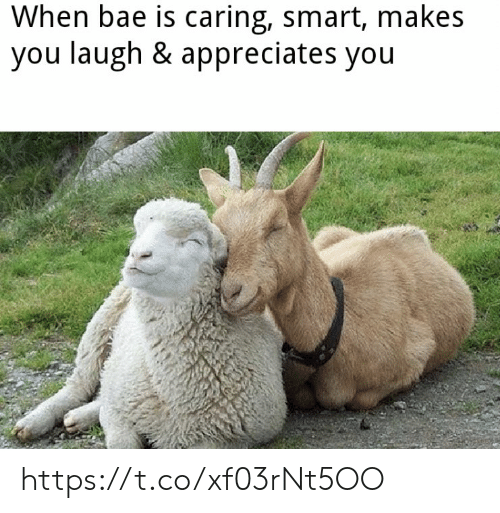 Bae, Memes, and 🤖: When bae is caring, smart, makes  you laugh & appreciates you https://t.co/xf03rNt5OO