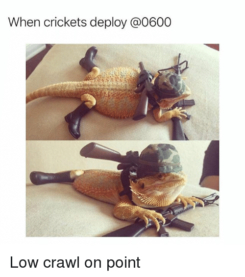 crickets: When crickets deploy @0600 Low crawl on point