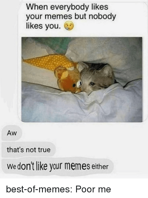Memes, True, and Tumblr: When everybody likes  your memes but nobody  likes you.  Aw  that's not true  Wedon't like your memes either best-of-memes:  Poor me