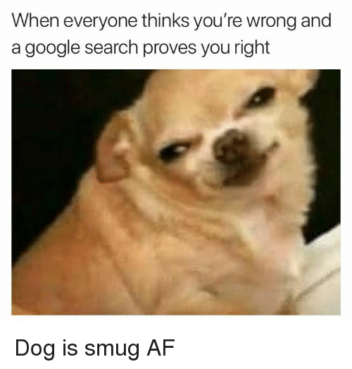 Af, Google, and Memes: When everyone thinks you're wrong and  a google search proves you right Dog is smug AF