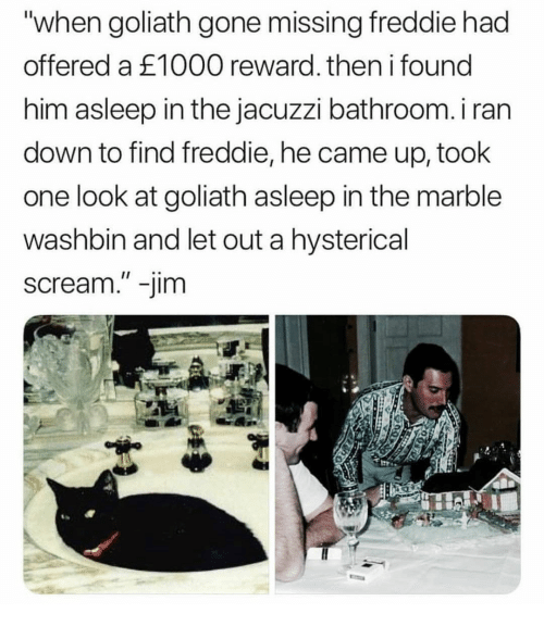 "Scream, Gone, and Him: ""when goliath gone missing freddie had  offered a £1000 reward. then i found  him asleep in the jacuzzi bathroom. i ran  down to find freddie, he came up, took  one look at goliath asleep in the marble  washbin and let out a hysterical  scream."" -jim"