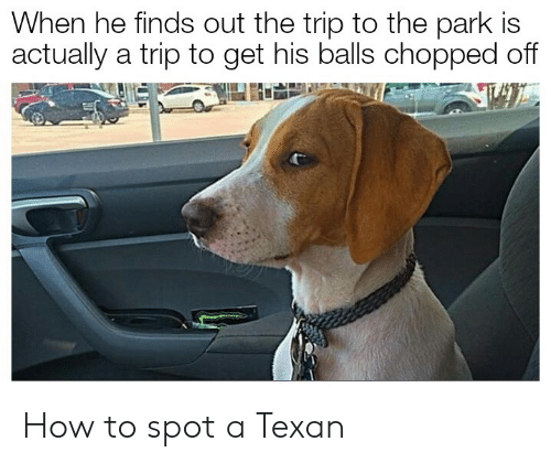 How To, Texan, and How: When he finds out the trip to the park is  actually a trip to get his balls chopped off How to spot a Texan