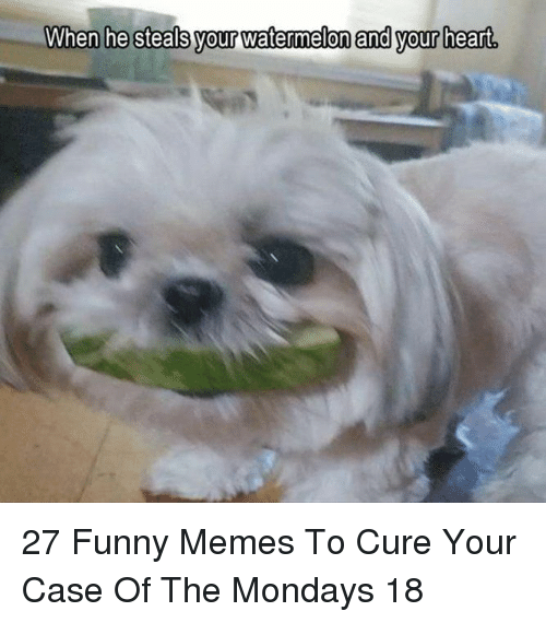 Funny, Memes, and Mondays: When he steals vour watermelon and vour heart  your vatermeton end your hearl 27 Funny Memes To Cure Your Case Of The Mondays 18