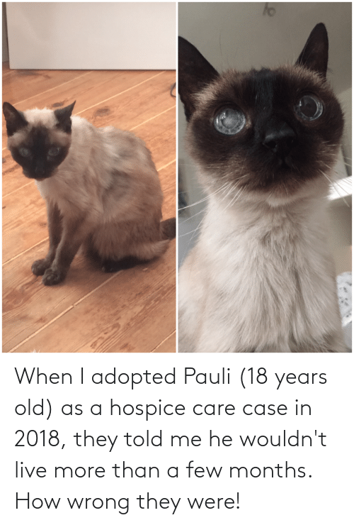 a-few-months: When I adopted Pauli (18 years old) as a hospice care case in 2018, they told me he wouldn't live more than a few months. How wrong they were!
