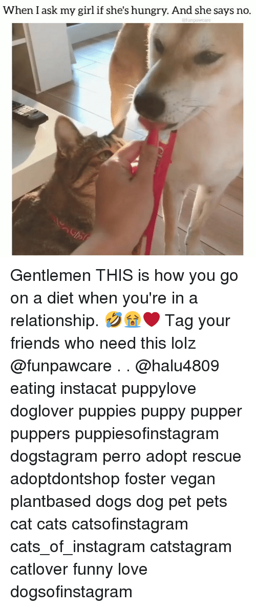 Cats, Dogs, and Friends: When I ask my girl if she's hungry. And she says no.  @funpawcare Gentlemen THIS is how you go on a diet when you're in a relationship. 🤣😭❤️ Tag your friends who need this lolz @funpawcare . . @halu4809 eating instacat puppylove doglover puppies puppy pupper puppers puppiesofinstagram dogstagram perro adopt rescue adoptdontshop foster vegan plantbased dogs dog pet pets cat cats catsofinstagram cats_of_instagram catstagram catlover funny love dogsofinstagram