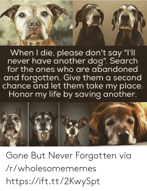 """gone but never forgotten: When I die, please don't say """"I'll  never have another dog"""". Search  for the ones who are abandoned  and forgotten. Give them a second  chance and let them take my place.  Honor my life by saving another. Gone But Never Forgotten via /r/wholesomememes https://ift.tt/2KwySpt"""