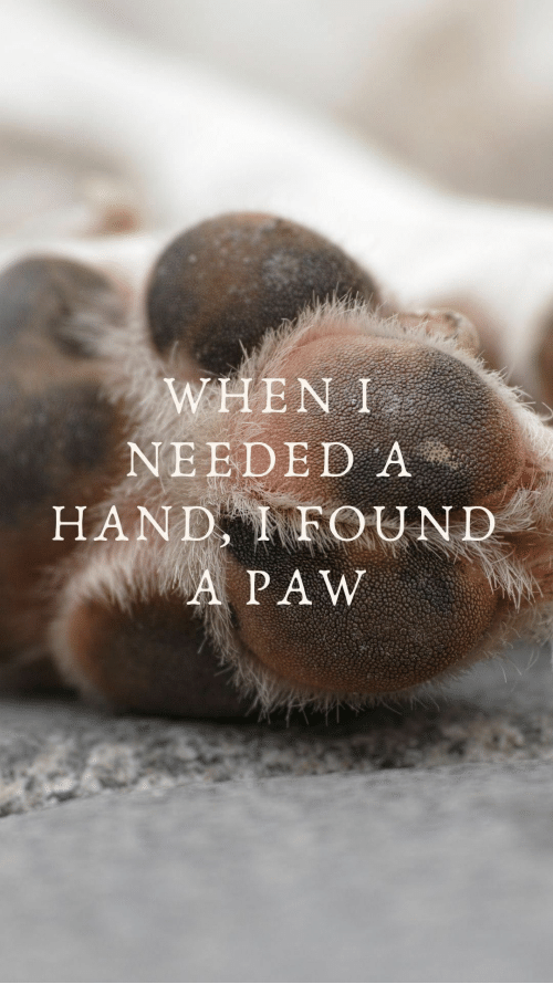 Hand, Needed, and  Paw: WHEN I  NEEDED A  HAND FOUND  A PAW