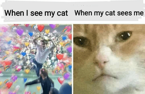 Memes, 🤖, and Cat: When I see my cat  When my cat sees me