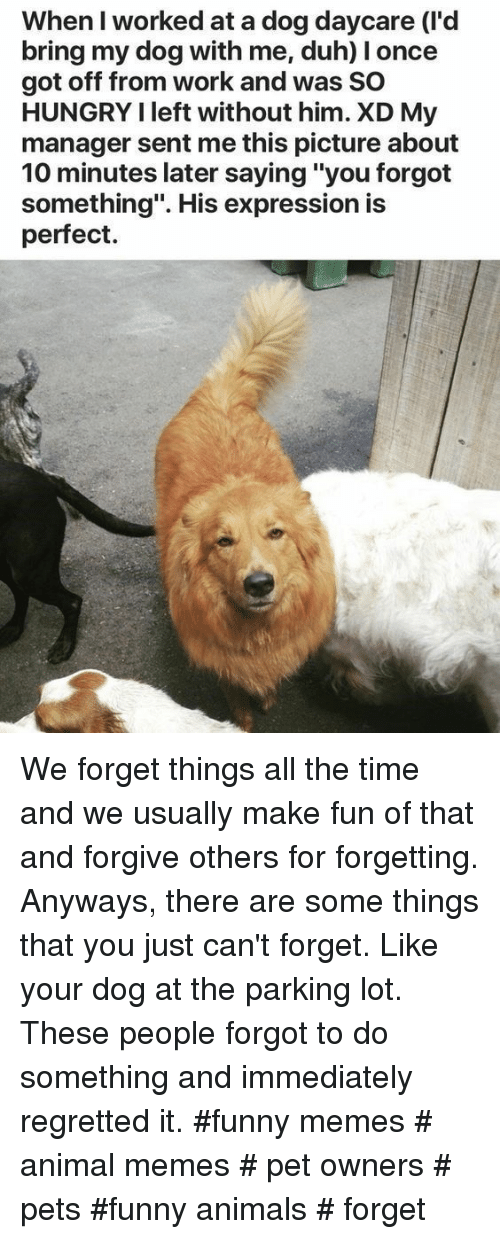 """Funny animals: When I worked at a dog daycare (I'd  bring my dog with me, duh) I once  got off from work and was SO  HUNGRY I left without him. XD My  manager sent me this picture about  10 minutes later saying """"you forgot  something"""". His expression is  perfect. We forget things all the time and we usually make fun of that and forgive others for forgetting. Anyways, there are some things that you just can't forget. Like your dog at the parking lot. These people forgot to do something and immediately regretted it. #funny memes # animal memes # pet owners # pets #funny animals # forget"""