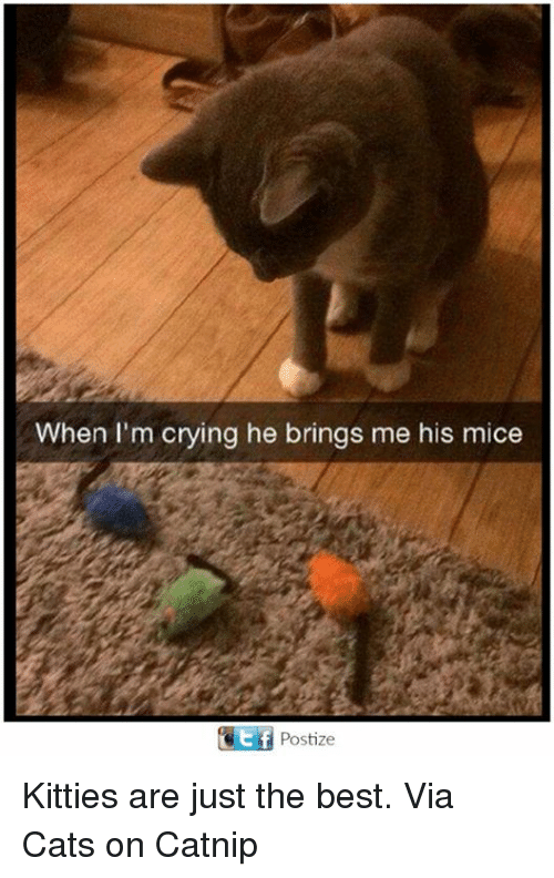 Cats, Crying, and Kitties: When I'm crying he brings me his mice  CEtf Postize Kitties are just the best. Via Cats on Catnip
