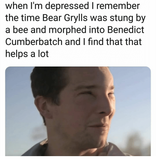 Bear, Time, and Helps: when I'm depressed I remember  the time Bear Grylls was stung by  a bee and morphed into Benedict  Cumberbatch and I find that that  helps a lot