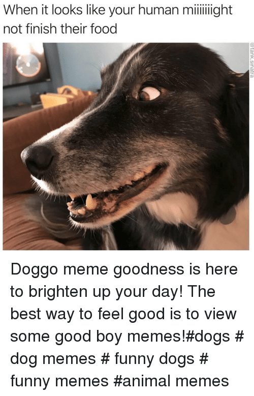 Dogs, Food, and Funny: When it looks like your human miight  not finish their food Doggo meme goodness is here to brighten up your day! The best way to feel good is to view some good boy memes!#dogs # dog memes # funny dogs # funny memes #animal memes