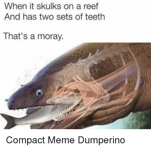 Meme, Teeth, and Reef: When it skulks on a reef  And has two sets of teeth  That's a moray. Compact Meme Dumperino