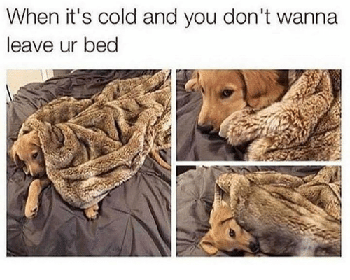 Cold, Humans of Tumblr, and You: When it's cold and you don't wanna  leave ur bed