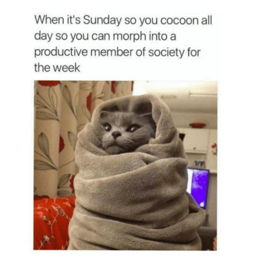 Morphing: When it's Sunday so you cocoon all  day so you can morph into a  productive member of society for  the week