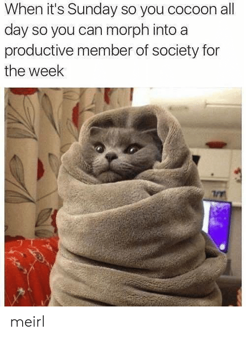Sunday, MeIRL, and Can: When it's Sunday so you cocoon all  day so you can morph into a  productive member of society for  the week meirl