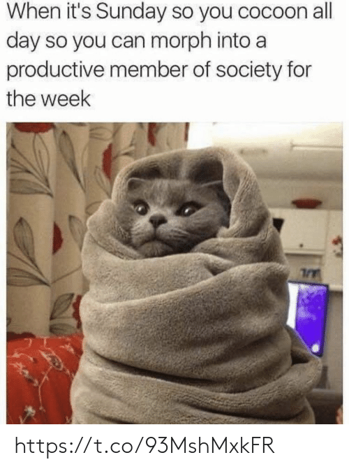Memes, Sunday, and 🤖: When it's Sunday so you cocoon all  day so you can morph into a  productive member of society for  the week https://t.co/93MshMxkFR