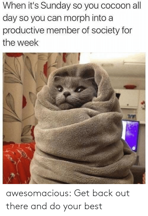 Member: When it's Sunday so you cocoon all  day so you can morph into a  productive member of society for  the week awesomacious:  Get back out there and do your best