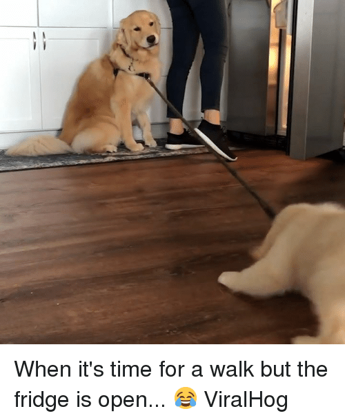 Time, Fridge, and Open: When it's time for a walk but the fridge is open... 😂  ViralHog