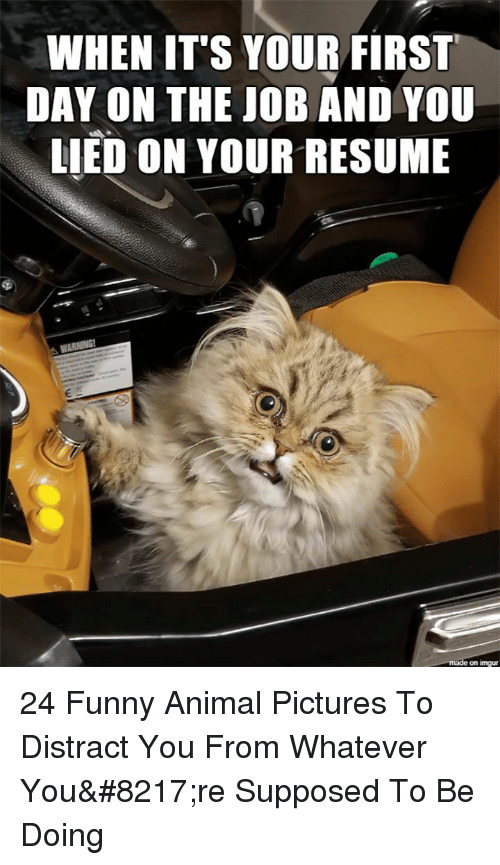 Funny, Animal, and Pictures: WHEN IT'S YOUR FIRST  DAY ON THE JOB AND YOU  LIED ON YOUR RESUME  on imgu 24 Funny Animal Pictures To Distract You From Whatever You're Supposed To Be Doing