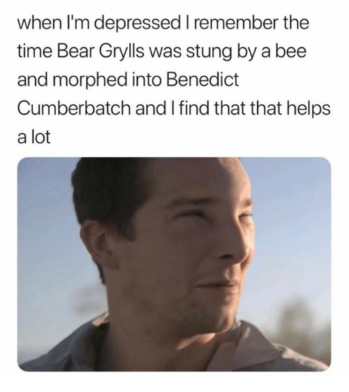 Bear, Time, and Humans of Tumblr: when l'm depressed remember the  time Bear Grylls was stung by a bee  and morphed into Benedict  Cumberbatch and I find that that helps  a lot