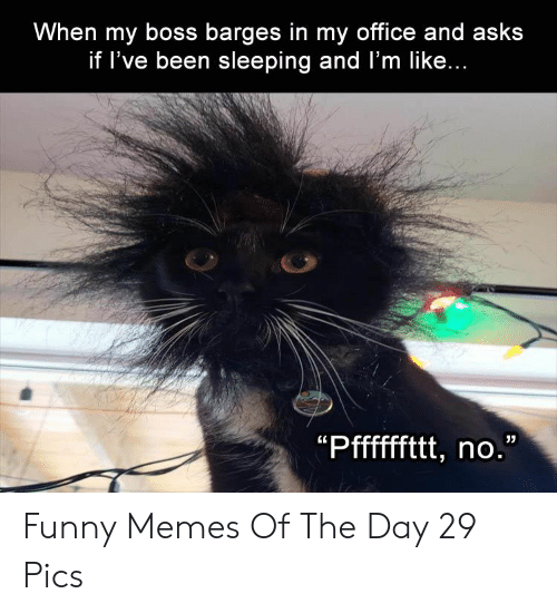 Funny, Memes, and Office: When my boss barges in my office and asks  if l've been sleeping and l'm like... Funny Memes Of The Day 29 Pics
