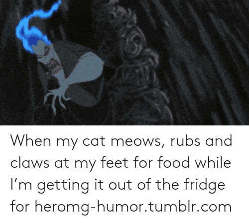 Meows: When my cat meows, rubs and claws at my feet for food while I'm getting it out of the fridge for heromg-humor.tumblr.com