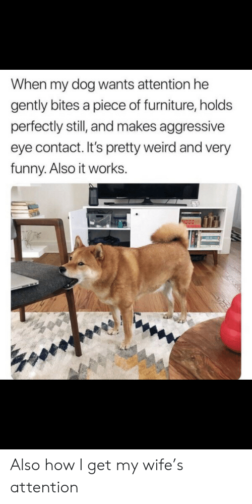 Funny, Weird, and Furniture: When my dog wants attention he  gently bites a piece of furniture, holds  perfectly still, and makes aggressive  eye contact. It's pretty weird and very  funny. Also it works. Also how I get my wife's attention