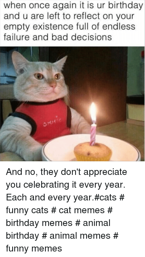 Birthday Memes: when once again it is ur birthday  and u are left to reflect on your  empty existence full of endless  failure and bad decisions And no, they don't appreciate you celebrating it every year. Each and every year.#cats # funny cats # cat memes # birthday memes # animal birthday # animal memes # funny memes