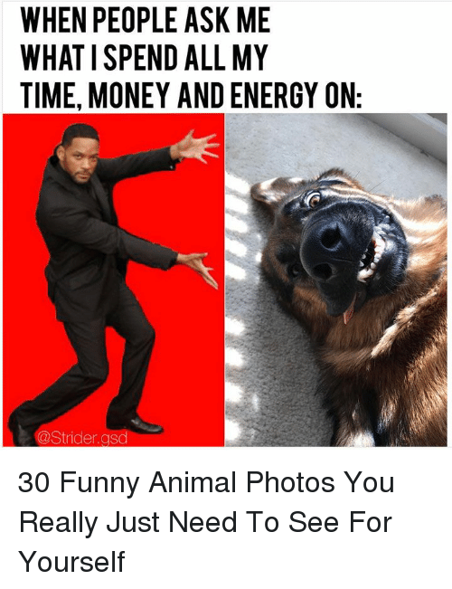 Energy, Funny, and Money: WHEN PEOPLE ASK ME  WHAT I SPEND ALL MY  TIME, MONEY AND ENERGY ON  @Strider.gsd 30 Funny Animal Photos You Really Just Need To See For Yourself