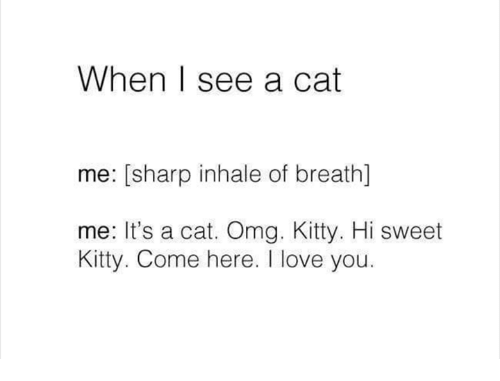 Love, Omg, and I Love You: When | see a cat  me: [sharp inhale of breath)]  me: It's a cat. Omg. Kitty. Hi sweet  Kitty. Come here. I love you.
