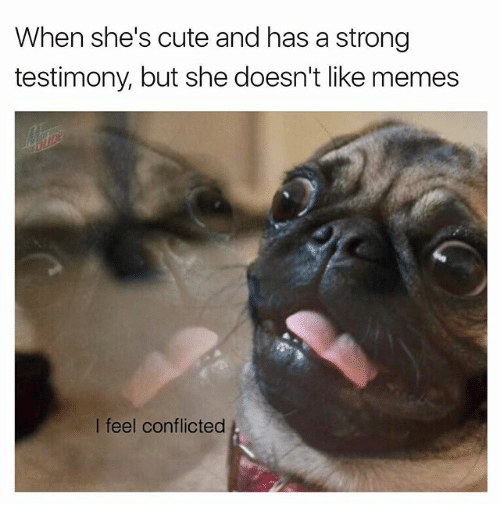 Cute, Memes, and Strong: When she's cute and has a strong  testimony, but she doesn't like memes  I feel conflicted